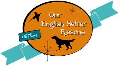 Setters Unlimited | Top English Setter Breeders | Elite